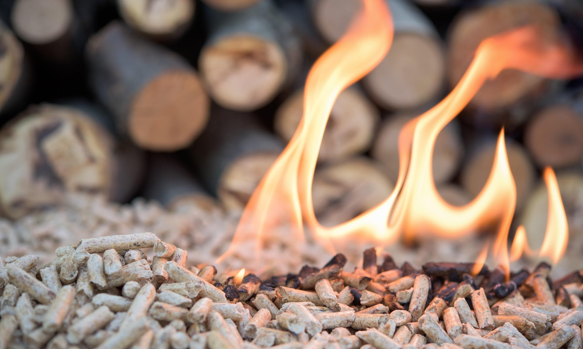 The dirty little secret behind 'clean energy' wood pellets