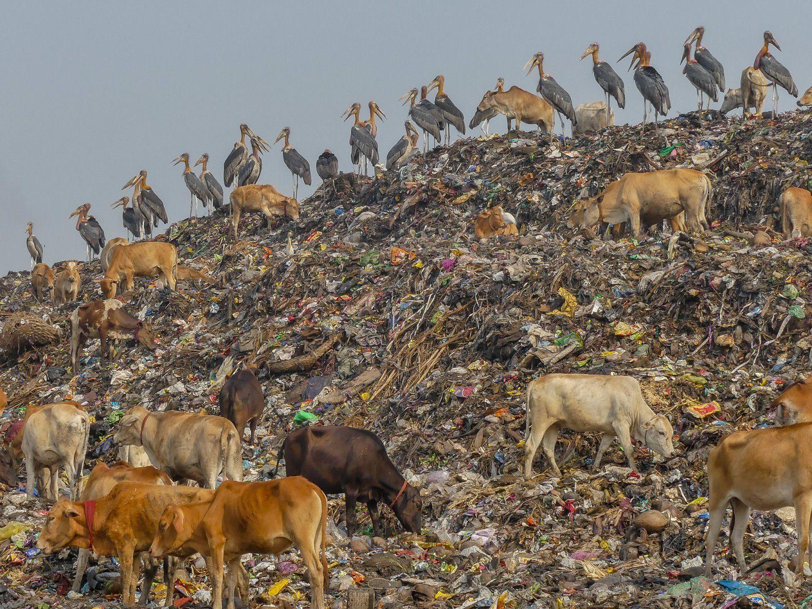 UN sets out Paris-style plan to slow extinction rate